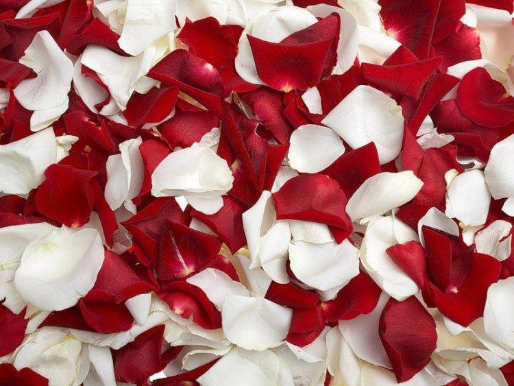 фото с лепестками роз фото