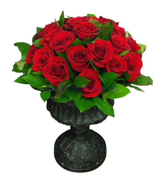 розы алые картинки